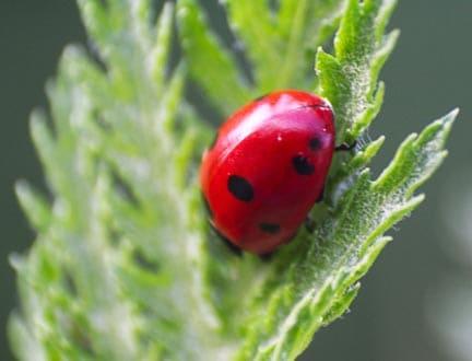 ladybug-prepare-yard-for-summer