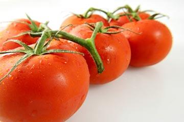 vegetable-gardening-tomatoes