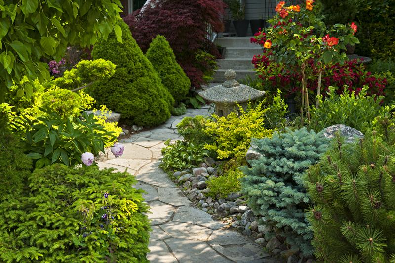 A stone walkway winding through a lush front yard garden.