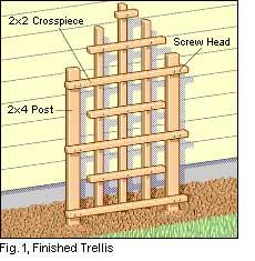 building a garden trellis