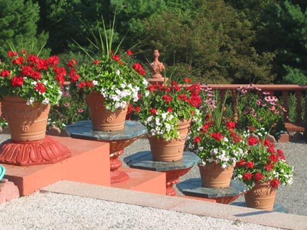 how to grow container plants