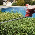 cutting hedge with hedge trimmer