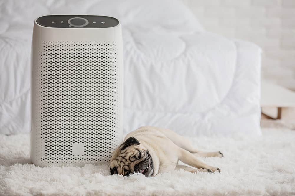 Pug dog lying next to an air purifier in a bright white bedroom.