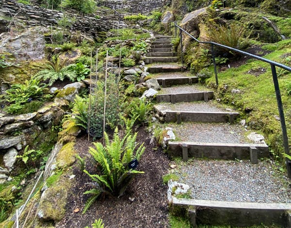 A fern-lined pathway made of pea gravel and wood dividers.