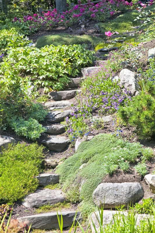Single file natural stone steps leading through a hillside garden.