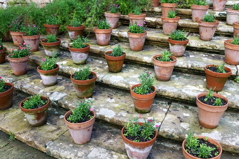 Small flower pots sitting on shallow stairs.