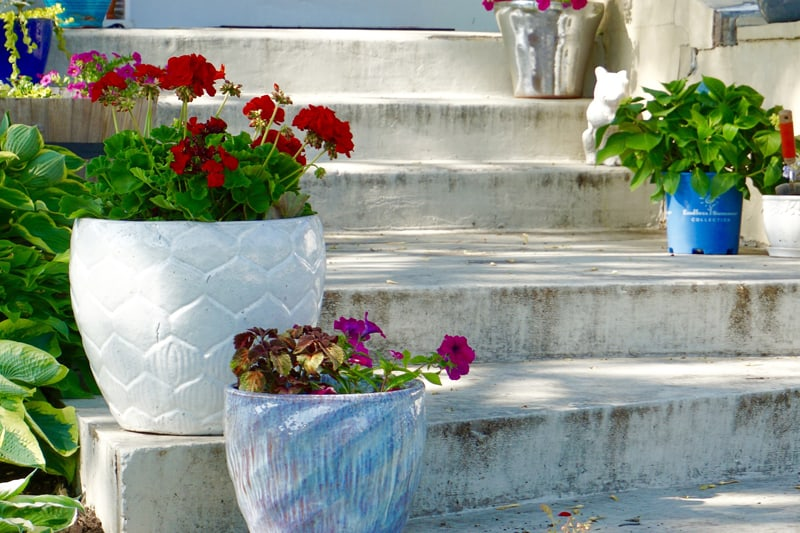 Flower pots with geraniums on white painted concrete stairs.